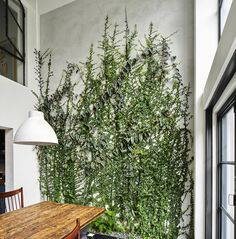 Architect Visit: A Dining Room Wallpapered with Climbing Vines in Brooklyn - Plants On Wall - Ideas of Plants On Walls - the most amazing indoor plant wall and garden around the dining table Green Wall Garden in Brooklyn by Kim Hoyt Indoor Climbing Plants, Indoor Plant Wall, Best Indoor Plants, Climbing Vines, Indoor Living Wall, Outdoor Plants, Living Room, Apartment Living, Living Area
