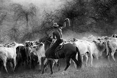 """""""... não se esqueça de meus cavalos e de minhas vacas. As vacas e os cavalos são seres maravilhosos. Minha casa é um museu de quadros de vacas e cavalos. Quem lida com eles aprende muito para sua vida e a vida dos outros."""" João Guimarães Rosa em entrevista a Günter Lorez: Diálogo com Guimarães Rosa.  Fotografia: Araquém Alcântara."""