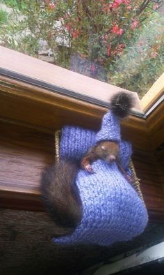 These Adorable Photos Of Baby Squirrels Will Bring You Happiness - World's largest collection of cat memes and other animals Squirrel Pictures, Funny Animal Pictures, Cute Pictures, Cute Funny Animals, Cute Baby Animals, Animals And Pets, Wild Animals, Cute Squirrel, Baby Squirrel