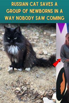 #Russian #Cat #Saves #Group #Newborns #Way #Nobody #Saw #Coming