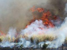 Defesa civil orienta população sobre baixa umidade do ar