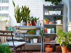 A small balcony with a grey shelving unit and greenhouse, that are filled with green plants and a foldable table with chairs.