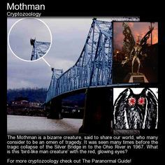 Mothman - Cryptozoology - In 2002 Richard Gere starred in 'The Mothman Prophecies', a film which saw him play a journalist on the hunt of a mythical creature that may or may not have caused the death. Weird Creatures, Fantasy Creatures, Mythical Creatures, Paranormal, Lago Ness, Emily The Strange, Myths & Monsters, Ancient Mysteries, Unexplained Mysteries