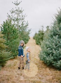 brothers at christmas tree farm Hunt for the perfect Christmas tree