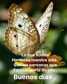 quotes in spanish Good Morning Messages, Good Morning Greetings, Morning Images, Good Morning Quotes, Spanish 1, Morning Wish, Spanish Quotes, Beautiful Butterflies, Germany Travel