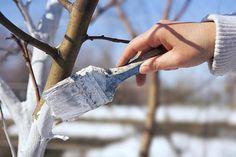 Văruirea copacilor: când, cum și dacă este voie sau nu - Perfect Ask Garden Care, Plantation, Gardening Tips, Garden Tools, Garden Ideas, Berries, Magazine, Calendar, Vegetables