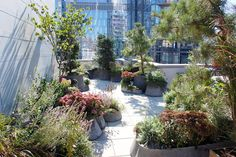 CityTerrace Opiary: Robert Cannon's planters. via Miss Rumphius' Rules.