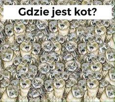 Na rysunku ukryty jest kot. Odszukanie go jest trudniejsze, niż myślisz - Genialne 3d Pen, Bigbang, Haha, Lily, Memes, Funny, Weekend Humor, Video, I Found You