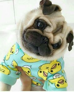 Stunning hand crafted pug accessories and pug jewelery available at PawsPassion.com! Show your pug puppy how much you love them by wearing our merchandise! #pug #puglife #pugs #puppy #jewelery #accessories #dogs #pups
