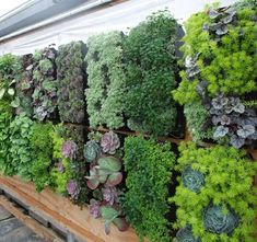 Inspiring Ideas for Gardens in Small Spaces