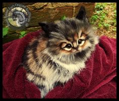 SOLD Handmade Kitten by Wood-Splitter-Lee on DeviantArt