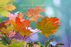 Autumn leaves restyled: flora041