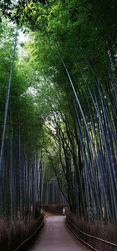 Arashiyama Bamboo Groves, Arashiyama, Kyoto (嵐山, 京都) | Japan