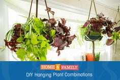 Add a pop of color into your home with a hanging plant combination. Pair together your favorite plants to create this easy, cheap, and light planter! Made by @edenmakersblog on Home and Family.