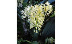 As mais belas orquídeas