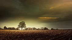 (Eric Goncalves) Tags: trees winter light england sky color tree nature colors beautiful field clouds rural canon landscape golden landscapes countryside view gloucestershire fields treescape forestofdean 6d canonef2470mmf4lisusm canon6d ericgoncalves
