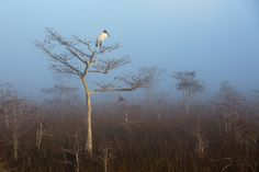 2015 Audubon Photography Awards Top 100   Audubon, Wood Stork