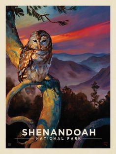 Anderson Design Group – American National Parks – Shenandoah National Park: Barred Owl #OilPaintingOwl