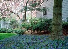 Vinca minor (a semi-evergreen perennial groundcover), Corner Landscaping, Landscaping Tips, Garden Landscaping, Ground Cover Plants, Garden Pool, Garden Projects, Garden Inspiration, Plants