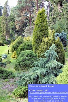 Image detail for -Bedgebury Pinetum dwarf conifer collection:: OS grid TQ7233 ...