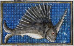 Swordfish by renzodionigi, via Flickr