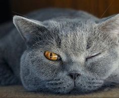 """* * """" We haz been knows to sleep wif one eye open. Livin' by yer wits be knowin' where de wasps be ats."""""""