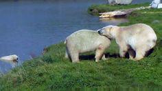 Top 5 Polar Bear Family Photos Of The Week