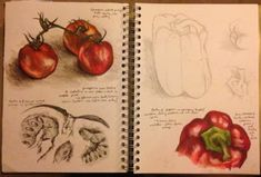 Gcse art sketchbook layout nature 15 Best Ideas may bacchus A Level Art Sketchbook, Sketchbook Layout, Arte Sketchbook, Sketchbook Pages, Sketchbook Ideas, Textiles Sketchbook, Natural Forms Gcse, Natural Form Art, Art Alevel