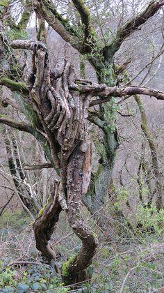 tree Spirit Weird Trees, Spooky Trees, Tree People, Magical Tree, Tree Faces, Tree Carving, Coastal Christmas, Modern Christmas, Country Christmas