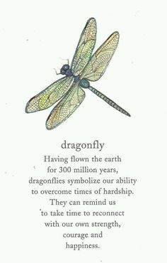 """""""Dragonfly"""" ~ Having flown the earth for 300 million years, dragonflies symbolize our ability to overcome times of hardship. They remind us to take time to reconnect with our own strength, courage and happiness."""