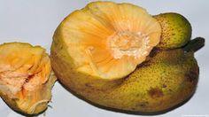 Lakoocha Fruit