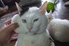 Stop it, Grandma. That's enough. #cat
