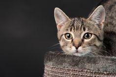 jakie Legowisko dla kota? Ranking 2018 i Opinie #cats #cat