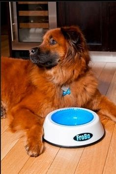 This special water bowl has a lining that you can place in your freezer, keeping the water cold for a longer period of time. | 28 Ingenious Things For Your Dog You Had No Idea You Needed