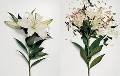 Jon Shireman dipped some flowers in a liquid nitrogen bath and then he smashed them on a hard surface. The results are just beautiful.