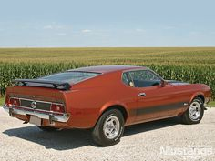 My Mach 1 looked exactly like this one! 1973 Mach 1 Mustang - 351 Cleveland big block engine could go from 0 to OMG in 10 seconds. 1973 Mustang, Mustang Mach 1, Mustang Fastback, Ford Mustang Shelby, Mustang Cars, Ford Mustangs, Shelby Gt500, Vintage Mustang, Custom Muscle Cars