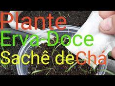 Erva-Doce: Como Plantar com Sachê de Chá, COMPARTILHE !!! - YouTube