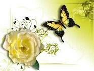 Yellow Rose and Butterfly