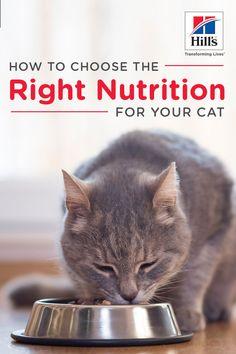 41 Best Cat Nutrition Images On Pinterest Cat Nutrition Best Cat