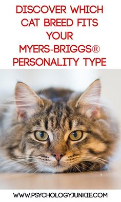 Find out which cat breed matches your Myers-Briggs®️️ personality type!