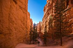 BRYCE CANYON NATIONAL PARK: The Queens Garden-Navajo Loop trail in the park, is a close-up journey among the hoodoos, and has been called the most spectacular 3-mile hike in the world.