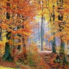 Le festival des couleurs d'automne débute bientôt dans les Laurentides au Québec!  #voyagevoyage #automne #paysages #destination #Laurentides #voyage #Québec #QC #blogvoyage #instatravel