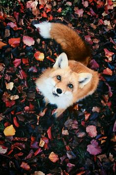 """Interview: Photographer Captures Enchantment of Real-Life """"F.- Interview: Photographer Captures Enchantment of Real-Life """"Fairy Forests"""" in Finland Cute Baby Animals, Animals And Pets, Funny Animals, Wild Animals, Wild Forest, Forest Fairy, Cute Animal Photos, Cute Pictures, Deer Pictures"""