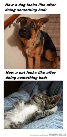 the difference between cats and dogs! dogs care more :P <3 cats dont give a damn :)