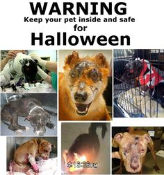 VERY IMPORTANT TO KEEP ALL ANIMALS INSIDE FOR HALLOWEEN. PLEASE PASS THE WORD FAR AND WIDE. HELP AS MANY