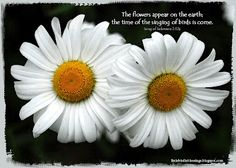 The flowers appear on the earth; the time of the singing of birds is come.  Song of Solomon 2:12