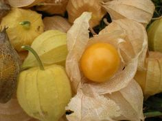 Blog avec des recettes de cuisine avec des plantes sauvages