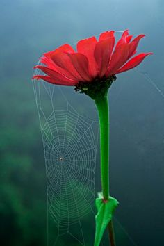 Net and flower via Betterphoto.com; Description: lens: EF-S 18-55 mm  location: Lingsey, India  time of day: Morning  Technical Details: f/6.3, 1/30 second, ISO 400