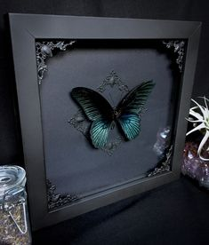 Taxidermy Mormon Butterfly by Oddity Asylum in gothic witch Halloween Black shadowbox - Oddity Asylum Butterfly and Insect Taxidermy - Decor Flower Shadow Box, Diy Shadow Box, Shadow Box Frames, Taxidermy Decor, Goth Home Decor, Butterfly Frame, Gothic House, Wonderland, Halloween Horror