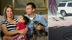 Hero cat's family tells story behind boy's rescue: 'Dog did not even know what hit him' - TODAY.com